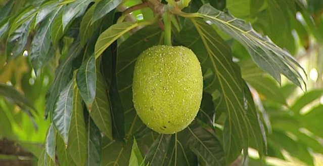 Le fruit de baobab bio Baomix