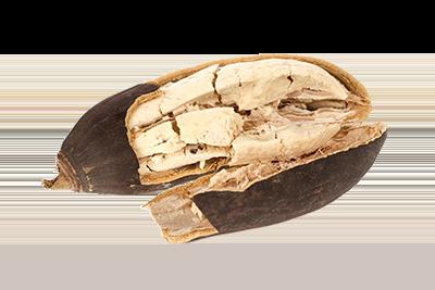 Le fruit de baobab bio Baomix disponible sur la boutique www.biologiquement.com